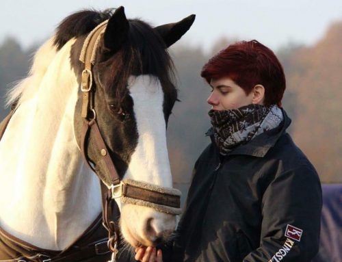 Met paarden werken in Japan