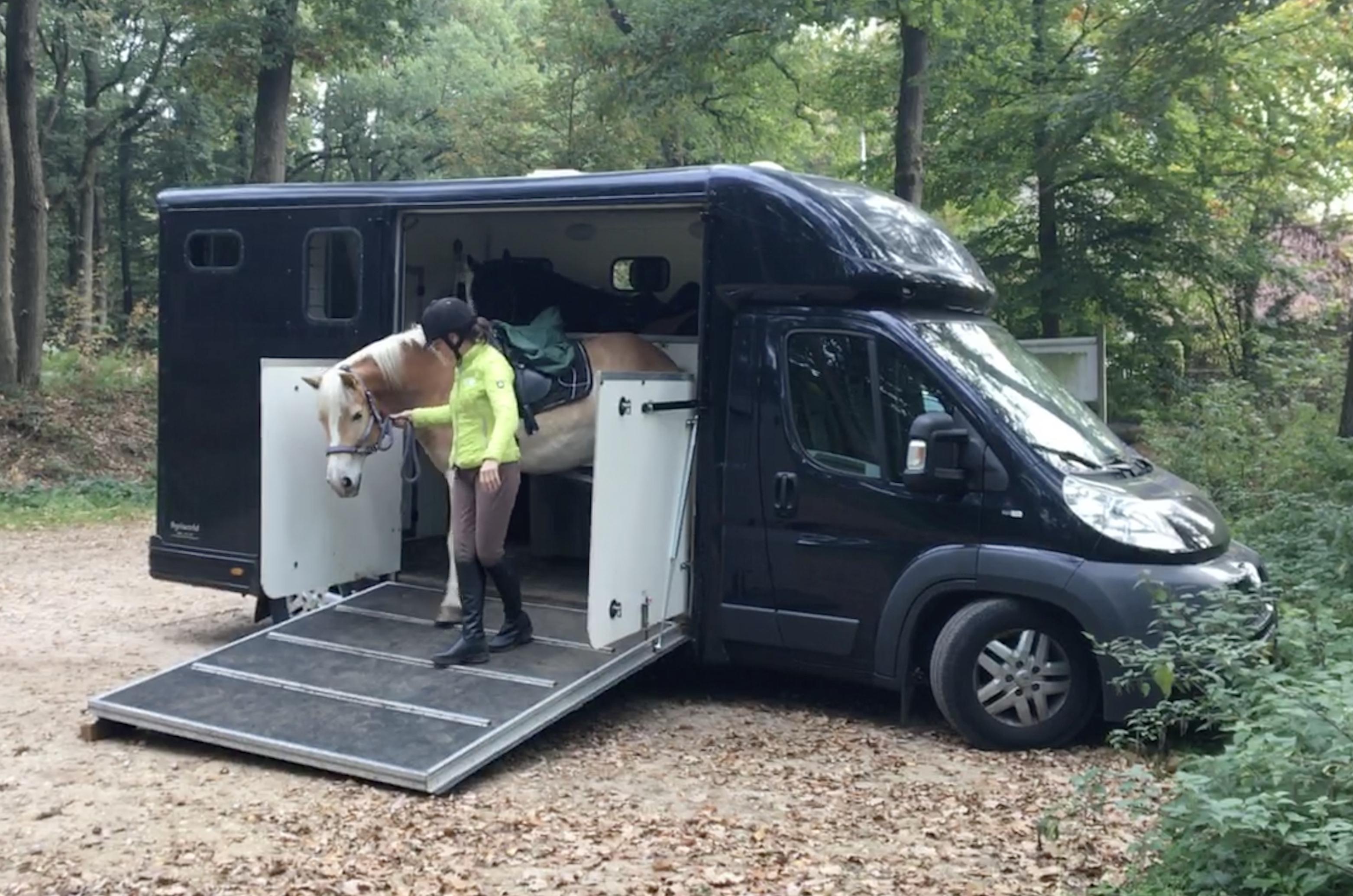 achteruit vervoeren van paarden