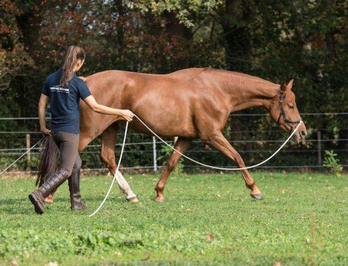 Revalidatie voor paarden